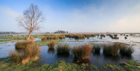 Bekijk meer foto's van Kalmthoutse Heide