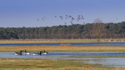 Steertse Heide