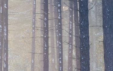 winters dennenbos