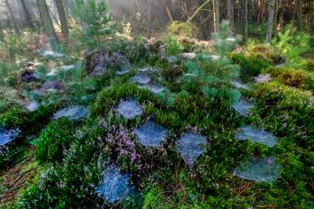 overgang tussen heide en bos