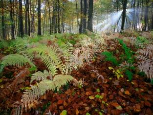 Lichtval in het Zonieënwoud