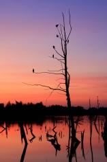 Aalscholvers wachten op de dageraad