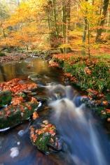 Herfstbeekje