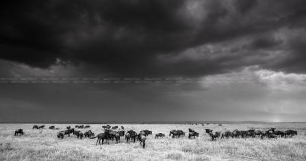 Bekijk meer foto's van Kenia