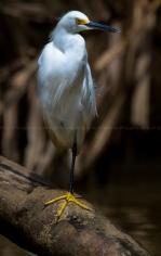 Bekijk meer foto's van Costa Rica