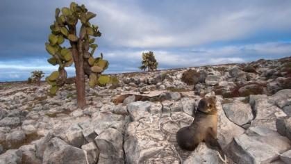 Bekijk meer foto's van Galapagos