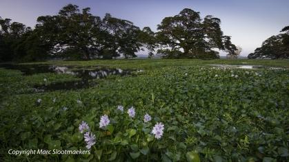 Bekijk meer foto's van Sri Lanka